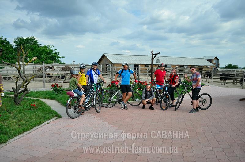 велотуристы на страусиной ферме