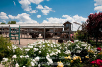 Фотоблог - страусиная ферма сегодня