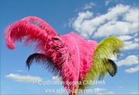 Фотоблог - страусина ферма стогодні